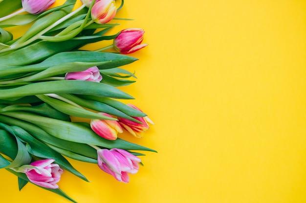 春のコンセプトです。黄色の背景にピンクと赤のチューリップ。コピースペース、平置き。