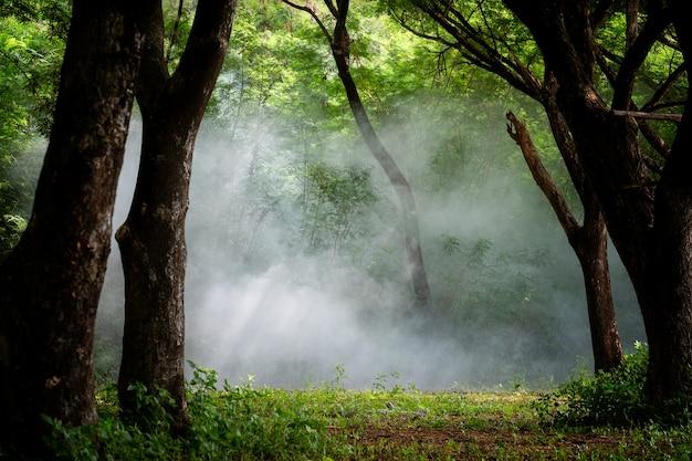 美しい霧の森、木の中の光が