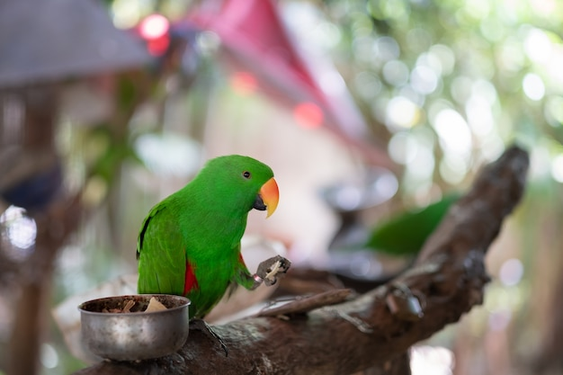美しい緑のオウム