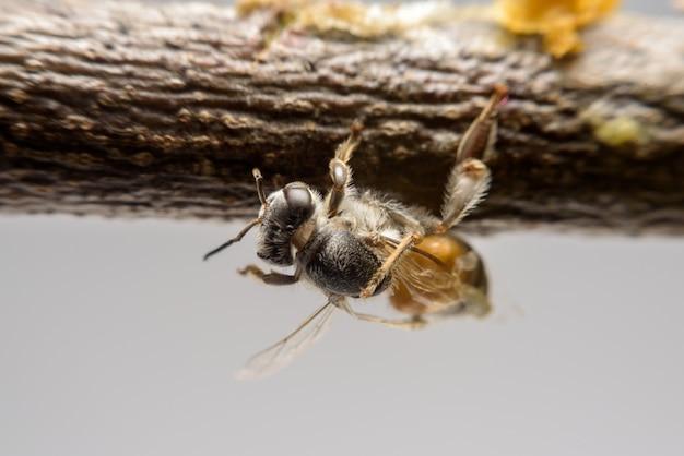 蜜蜂の近くの枝に蜂が登る