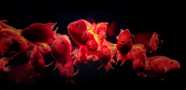 水族館の魚の群れレッドオウム
