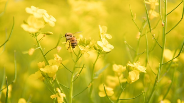 Мед пчелы опыляют желтый цветок на весеннем лугу.