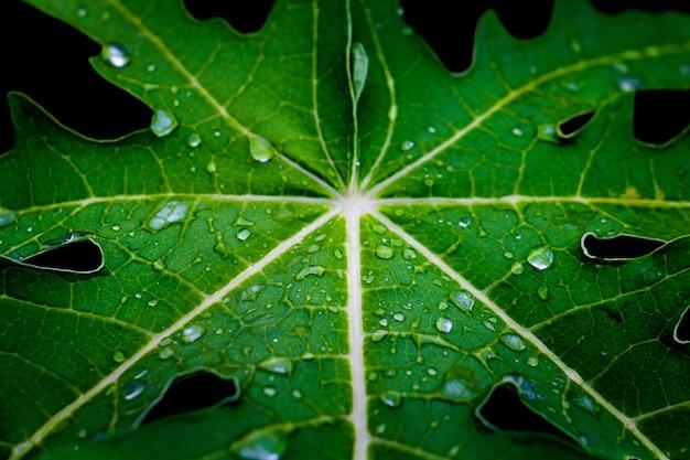 露と緑の葉の背景