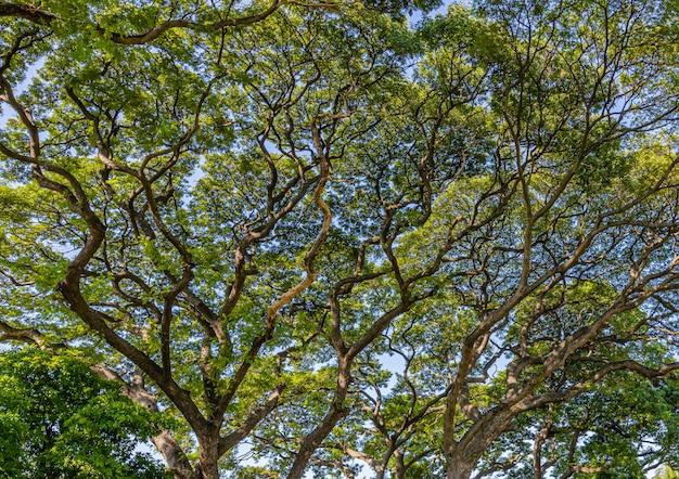 背景の大きな木の枝
