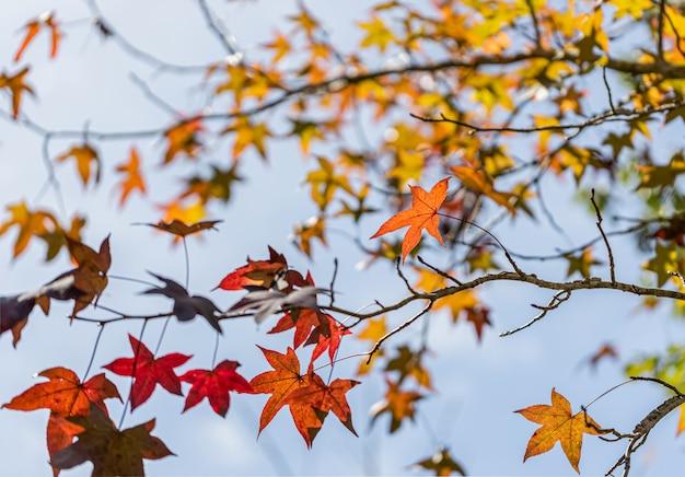 Красивый кленовый лист для фона