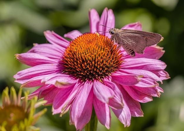 花と日光の蝶