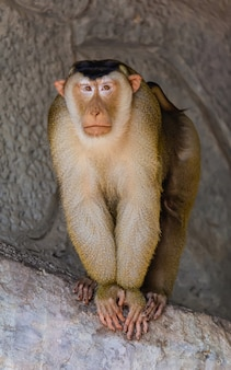 孤独感のある雄猿