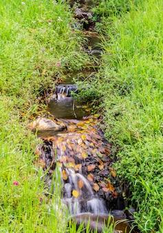 ジャングルの中で水路