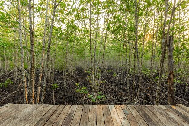 マングローブ林と朝の光
