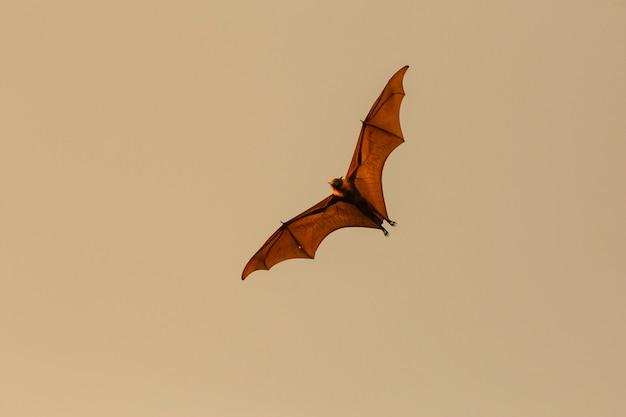 コウモリが飛んでいる