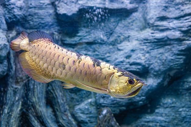 水族館の海魚と淡水魚について