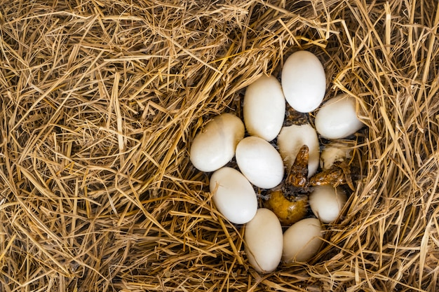 Крокодиловые яйца и личинки рождаются