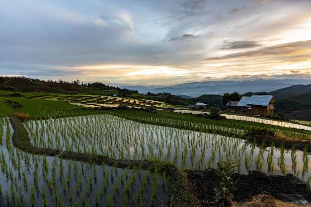 雨季、タイのチェインマイのパボンピアン棚田