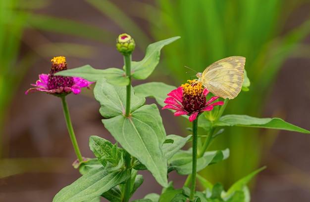 緑の自然の中で蝶します。