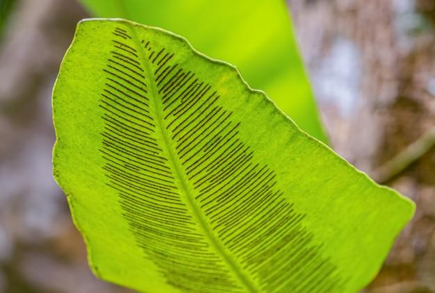 緑の葉の芸術