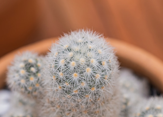 小さなサボテンと砂漠の植物