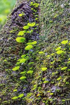 Большие деревья - дом маленьких жизней