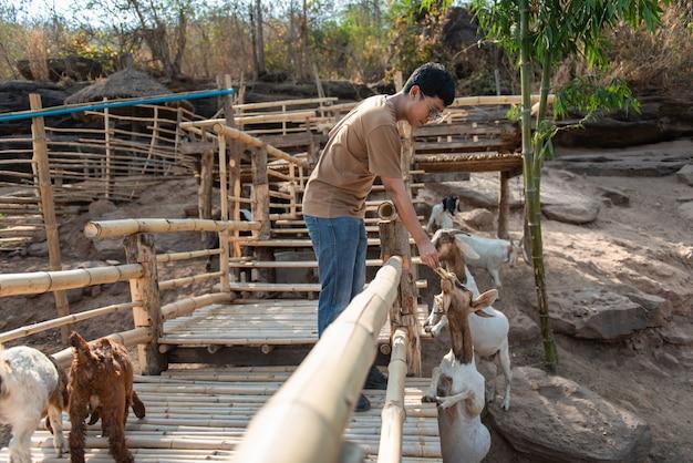 男は農場でバナナとヤギを送ります。