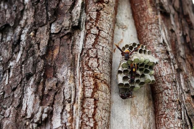 巣の上の幼虫を構築し保護するバクテスを閉じます。