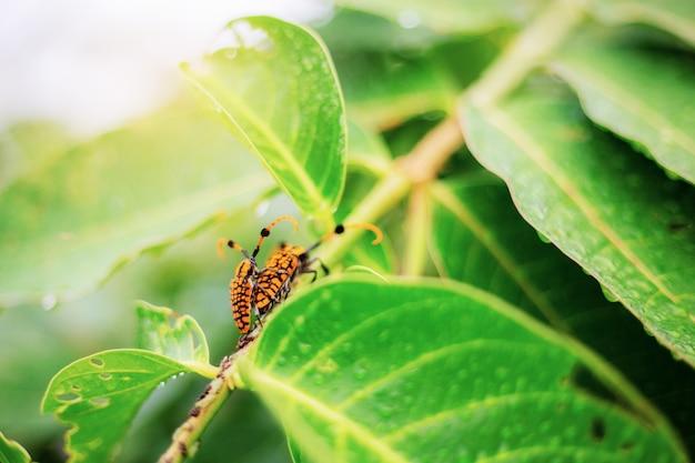 昆虫が繁殖する。