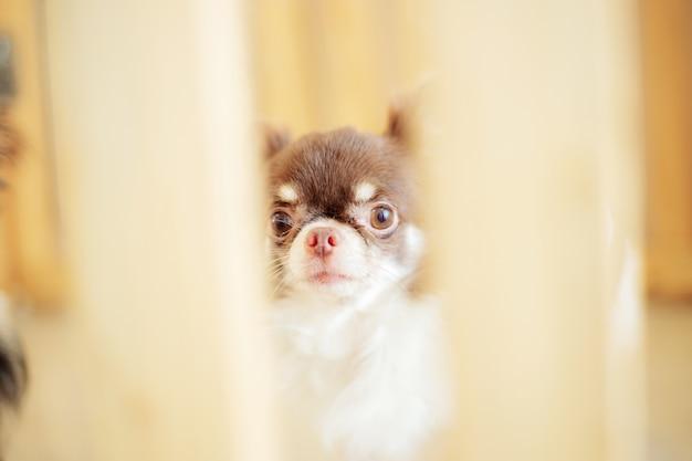 ケージの犬。