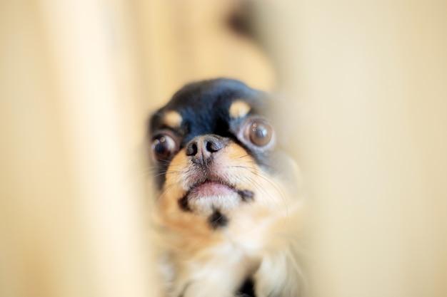 犬はぼかしの背景。