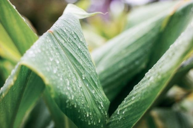 Листья завод в сезон дождей.