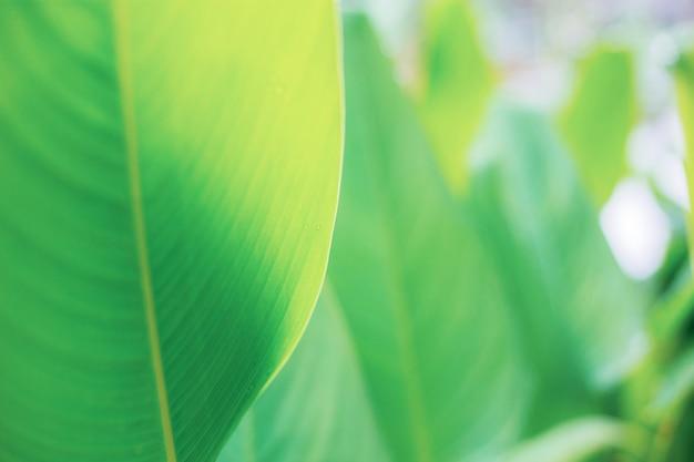 Листья с солнечным светом в саду.