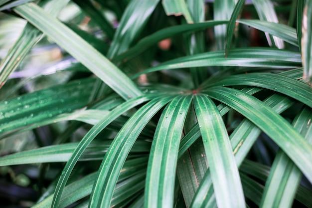 Растение при солнечном свете в парке.