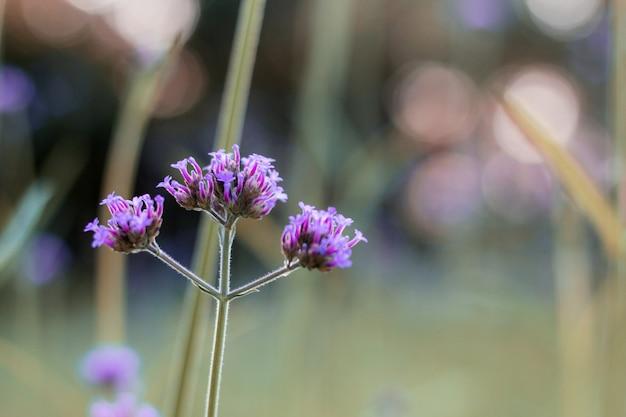 冬にはバーベナの花。