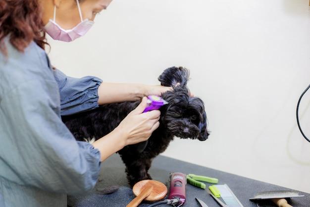 女性はテーブルの犬の毛を切断している。