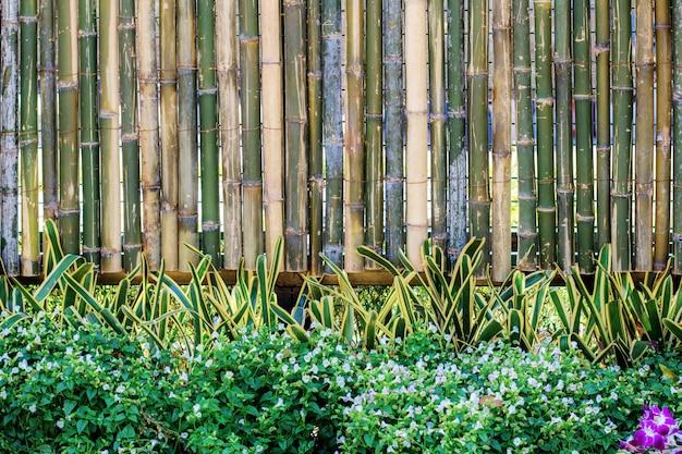 竹垣に植える。