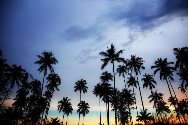 空に夕暮れのヤシの木。