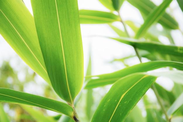 空に緑の葉。