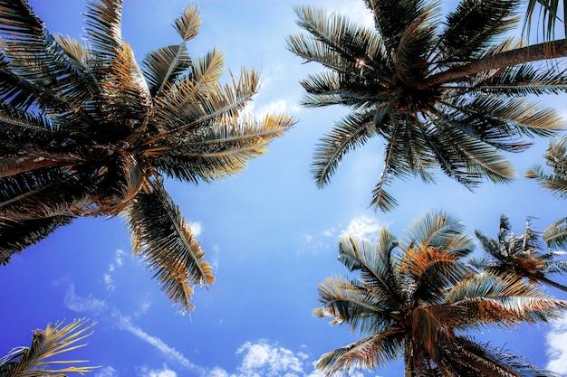 夏の日光でヤシの木。