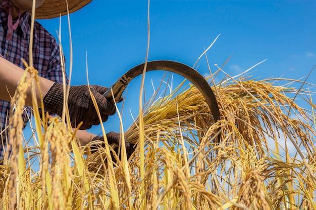 青い空のフィールドで収穫する農家。