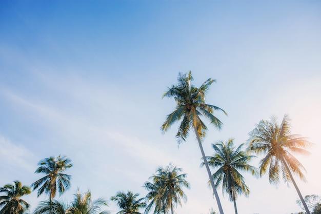 空と日光でココナッツの木。