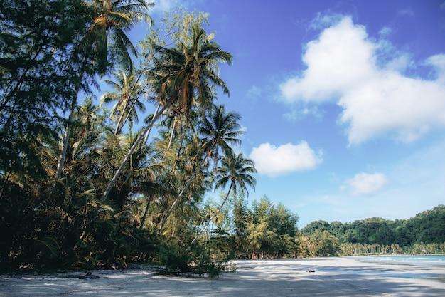 空のビーチでココナッツの木。