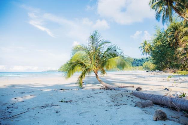 ココナッツの木のビーチ。
