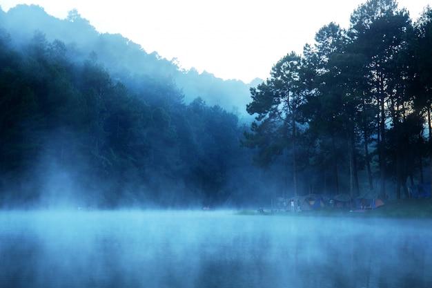 自然の朝の霧。