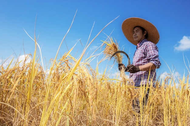 日光の畑の農家。