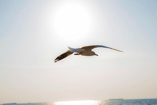 日光で飛んでいるカモメ。