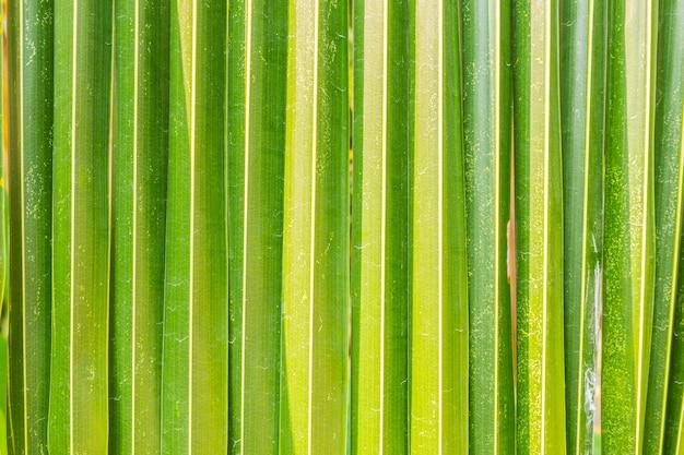 Поверхность кокосовых листьев.