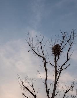 大きな鳥の巣
