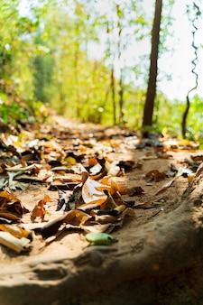 乾いた葉でトレッキングロードカバー