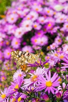 紫色の花に色の蝶