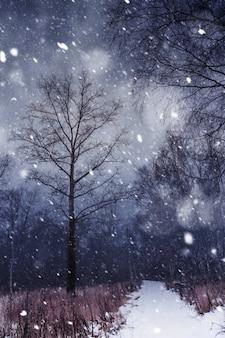 冬の森と降雪