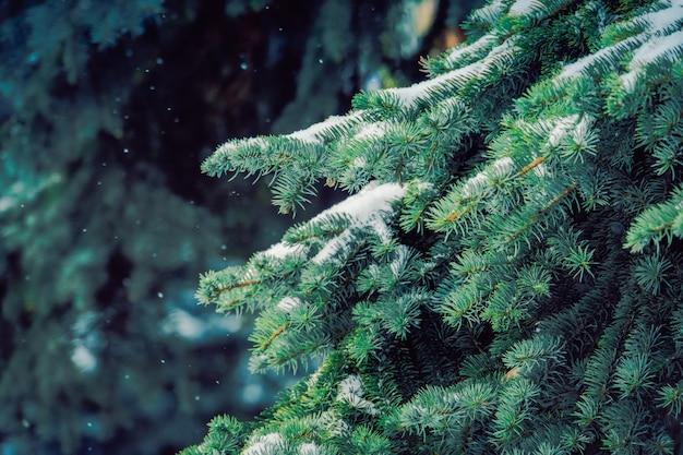 冬の常緑樹