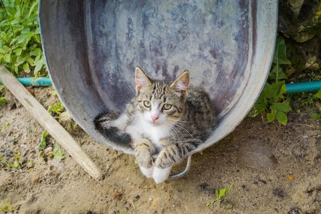メタル盆地の猫
