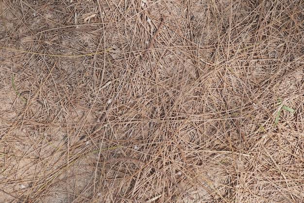 松葉は葉の背景